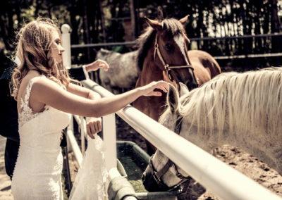 2 plener ślubny konie